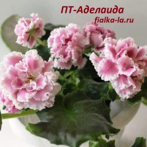 ПТ-Аделаида (Пугачёва Т.)
