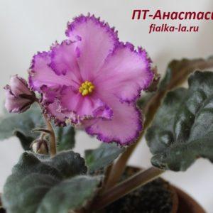 ПТ-Анастасия (Пугачёва Т.)