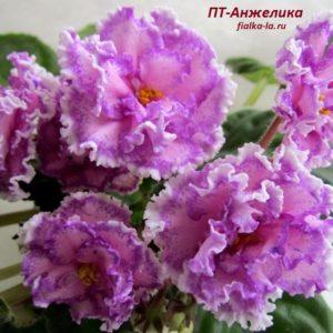 ПТ-Анжелика (Пугачёва Т.)