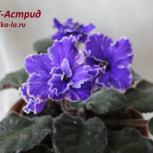 ПТ-Астрид (Пугачёва Т.)