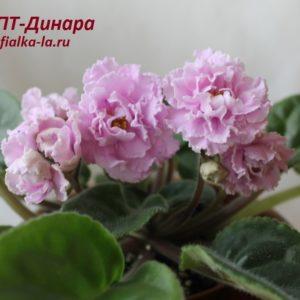 ПТ-Динара (Пугачёва Т.)