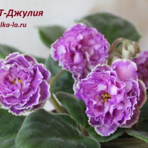 ПТ-Джулия (Пугачёва Т.)
