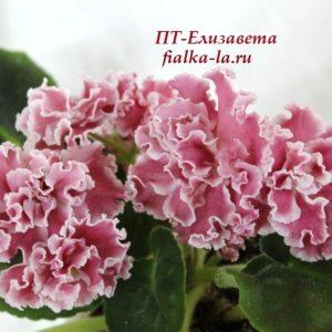 ПТ-Елизавета (Пугачёва Т.)