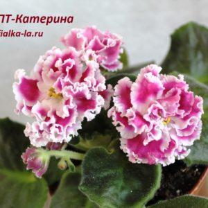 ПТ-Катерина (Пугачёва Т.)