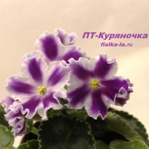 ПТ-Куряночка (Пугачёва Т.)