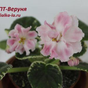 ПТ-Веруня (Пугачёва Т.)