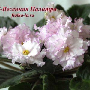ПТ-Весенняя Палитра (Пугачёва Т.)