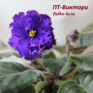 ПТ-Виктори (Пугачёва Т.)