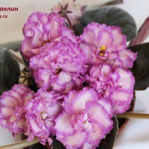 ПТ-Жаклин (Пугачёва Т.)