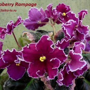Raspberry Rampage (Sorano)