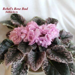 Rebel's Rose Bud