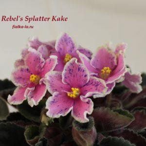 Rebel's Splatter Kake