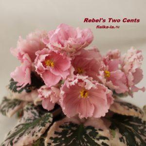 Rebel's Two Cents (Bann)