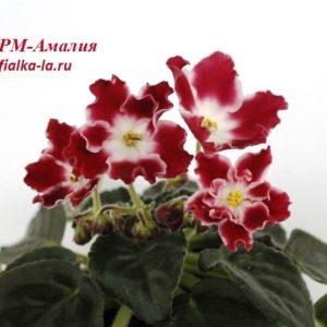 РМ-Амалия (Скорнякова Н.)