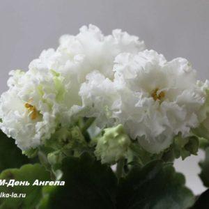 РМ-День Ангела (Скорнякова Н.)