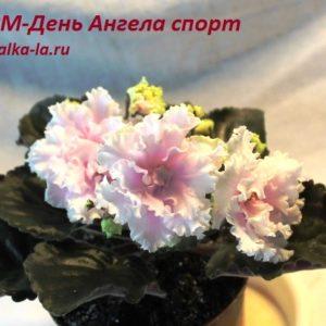 РМ-День Ангела спорт (Скорнякова Н.)