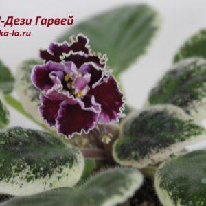 РМ-Дези Гарвей (Скорнякова Н.)