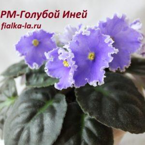 РМ-Голубой Иней (Скорнякова Н.)