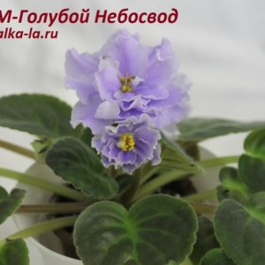 РМ-Голубой Небосвод (Скорнякова Н.)