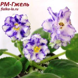РМ-Гжель (Скорнякова Н.)