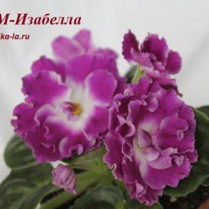 РМ-Изабелла (Скорнякова Н.)