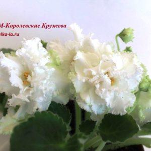РМ-Королевские Кружева (Скорнякова Н.)