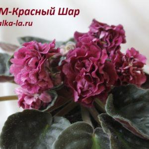 РМ-Красный Шар (Скорнякова Н.)