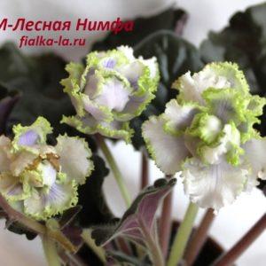 РМ-Лесная Нимфа (Скорнякова Н.)