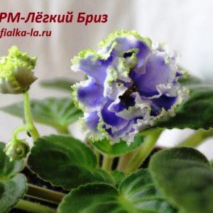 РМ-Лёгкий  Бриз (Скорнякова Н.)