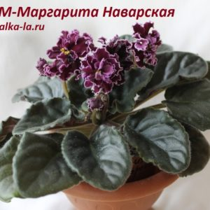 РМ-Маргарита Наваррская (Скорнякова Н.)