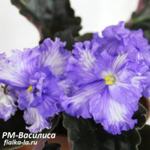 РМ-Василиса (Скорнякова Н.)