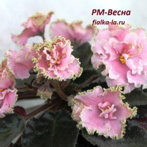 РМ-Весна (Скорнякова Н.)