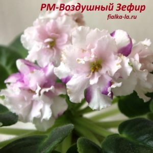 РМ-Воздушный Зефир (Скорнякова Н.)