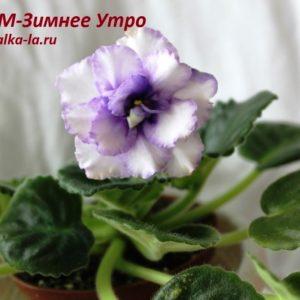 РМ-Зимнее  Утро (Скорнякова Н.)