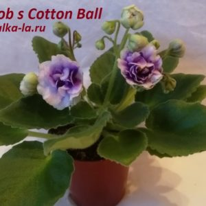 Rob s Cotton Ball