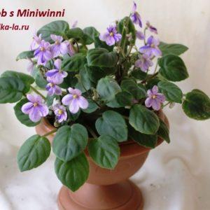 Rob's Miniwinni