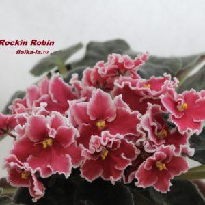 Rockin Robin (Sorano)