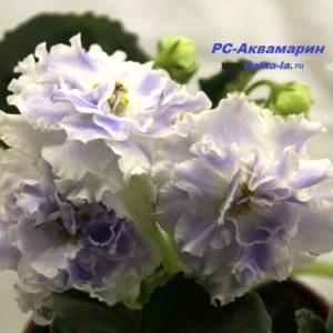 РС-Аквамарин (Репкина С.)