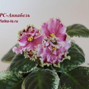 РС-Аннабель (Репкина С.)