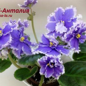 РС-Анталия (Репкина С.)