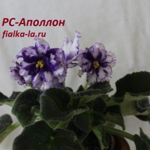 РС-Аполлон (Репкина С.)