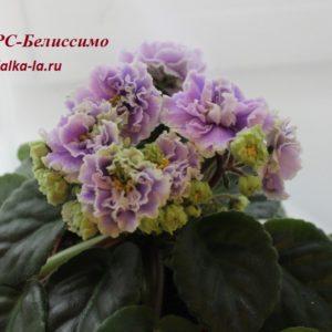 РС-Белиссимо (Репкина С.)