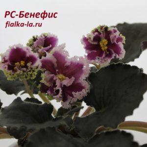 РС-Бенефис (Репкина С.)