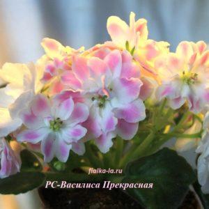 РС-Василиса Прекрасная (Репкина С.)