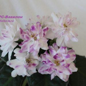 РС-Вавилон (Репкина С.)