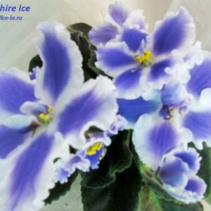 Sapphire Ice (Sorano)