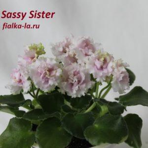 Sassy Sister (Sorano)
