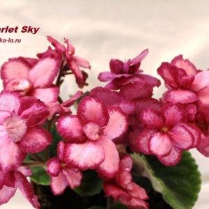 Scarlet Sky (Sorano)