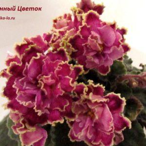 Каменный Цветок ( Морев К.)