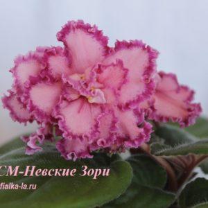 СМ- Невские Зори (Сеянец Морева К.)